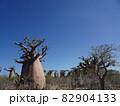 【マダガスカル】太っちょバオバブの森の景色(アンダバドアカ) 82904133