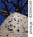 【マダガスカル】下から見上げた、アンダバドアカの太っちょバオバブの木 82904140