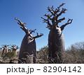 【マダガスカル】アンダバドアカの太っちょバオバブの木達 82904142