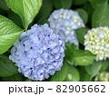 紫陽花 (愛知県岡崎市) 82905662