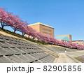 河津桜 (乙川/愛知県岡崎市) 82905856