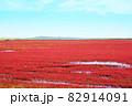 赤く色づいたサンゴ草 82914091