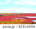 赤く色づいたサンゴ草 82914094