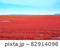 赤く色づいたサンゴ草 82914096