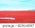 赤く色づいたサンゴ草 82914097