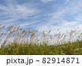 秋の空とススキ 82914871