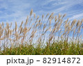 秋の空とススキ 82914872