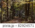 宮古の秋、森の森林浴 82924571