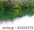 青森県十二湖の緑色の池と木々たち 82924579