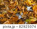 黄色の落ち葉と鳥の羽 82925074