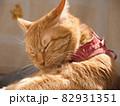 日光浴しながら毛繕いする猫 82931351