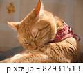 毛繕いする猫 82931513