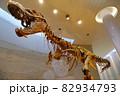 恐竜 ティラノサウルスの骨格標本 82934793