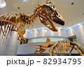 恐竜 ティラノサウルスとトリケラトプスの骨格標本 82934795