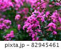 縮れているピンク色の花 82945461