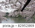 公園の桜と湖 82952869