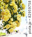 黄色のバラ 82959758