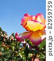 青空にピンクと黄色のバラアップ 82959759