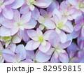 紫と青のロマンチックな紫陽花のアップ 82959815