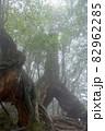 屋久島白谷雲水峡の森(2月)幻想的な屋久杉くぐり杉 82962285
