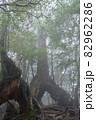 屋久島白谷雲水峡の森(2月)幻想的な屋久杉くぐり杉 82962286