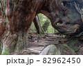屋久島白谷雲水峡の森(11月)屋久杉くぐり杉 82962450