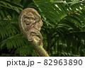 歯朶の葉の幼生風景 82963890