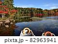 紅葉の盛りを迎えた白駒池 82963941