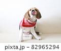 ベロを出すビーグル犬パピー 82965294