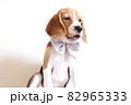 大きなリボンをつけたビーグル犬パピー 82965333