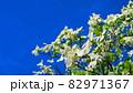 ハナミズキと青空の風景 82971367