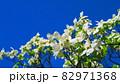 ハナミズキと青空の風景 82971368