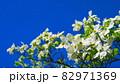 ハナミズキと青空の風景 82971369