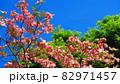 ハナミズキと青空の風景 82971457