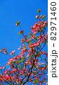 ハナミズキと青空の風景 82971460