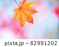 もみじ 紅葉 秋イメージ 82991202