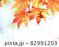 もみじ 紅葉 秋イメージ 82991203