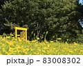 お花畑の黄色いドア どこでもドア フォトスポット 83008302
