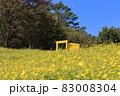 お花畑の黄色いドア どこでもドア フォトスポット 83008304