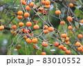 柿の実 里山の柿 柿の木 83010552