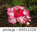 街路樹に彩りを添えるピンクのバーベナ 83011228