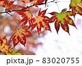 晩秋に輝く紅葉 83020755