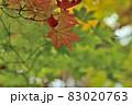 晩秋に輝く紅葉 83020763