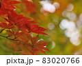 晩秋に輝く紅葉 83020766