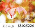 色づく桜の葉 83025220