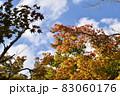 紅葉の木のグラディエーションと秋の空 83060176