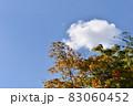 色付いた紅葉の木と雲が漂う青空 83060452