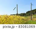 収穫前の乾燥した稲穂 83081069
