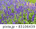 ラベンダーの花畑 83106439