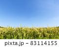 収穫前の実った稲穂 日置市伊作田 83114155